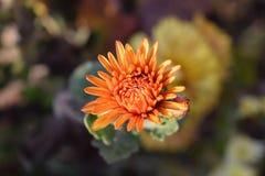 Blommor i höst Fotografering för Bildbyråer