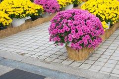 Blommor i höst Royaltyfri Bild
