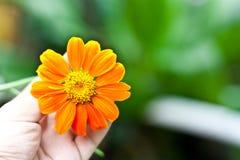 Blommor i hand Royaltyfri Fotografi