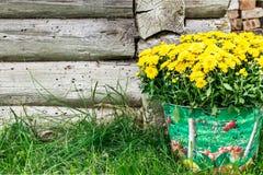 Blommor i hinken Landsstil Arkivbilder