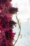 Blommor i isen Royaltyfri Fotografi
