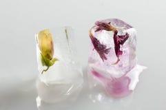 Blommor i iskub Fotografering för Bildbyråer