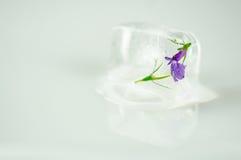 Blommor i iskub Royaltyfria Foton
