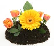 Blommor i jordningen Royaltyfri Bild