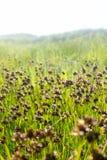 Blommor i Kalifornien arkivfoton