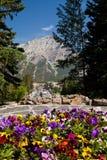 Blommor i kaskadträdgården i Banff arkivfoton