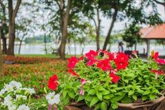 Blommor i korgen Arkivbilder