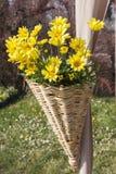 Blommor i korgen Arkivbild