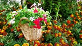 Blommor i korgen i trädgården Arkivfoton