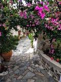 Blommor i Kreta Royaltyfria Foton