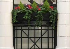 blommor i kruka och fönster Royaltyfria Bilder
