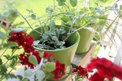 Blommor i krukor på terrass Arkivbild