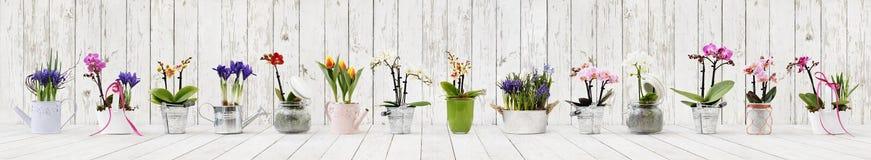 Blommor i krukor ställde in isolerat på vit träbakgrund, rengöringsdukbaner med kopieringsutrymme för blomsterhandlare shoppar royaltyfri fotografi