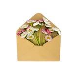 Blommor i kuvertet Arkivbilder
