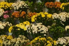 Blommor i lager Arkivbild