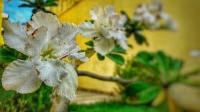 Blommor i makro royaltyfria bilder