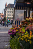 Blommor i Marienplatz Arkivbild