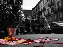 Blommor i Milan Arkivbild