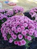 Blommor i min trädgård arkivfoton