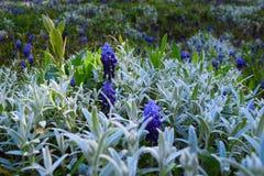 Blommor i morgonen Arkivfoto