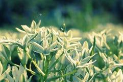 Blommor i morgonljuset Arkivfoton