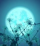 Blommor i natten Fotografering för Bildbyråer