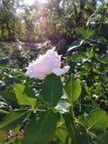 Blommor i nedgången royaltyfria bilder