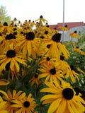 Blommor i nedgången Royaltyfri Fotografi