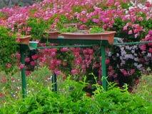 Blommor i neighbor&en x27; s-trädgård Royaltyfri Foto