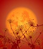 Blommor i night01en Arkivbilder