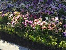 Blommor i Paris Disney Arkivfoto