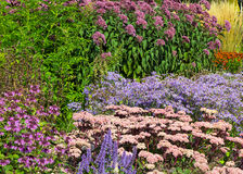Blommor i parkera arkivbilder