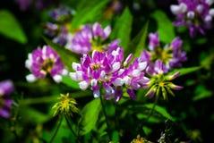Blommor i parkera Royaltyfri Fotografi