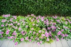Blommor i parkera Fotografering för Bildbyråer