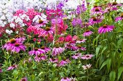 Blommor i parkera Arkivfoto