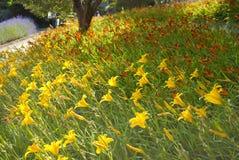 Blommor i parkera Guell i Barcelone Arkivfoton