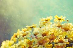Blommor i regna arkivfoton