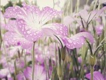 Blommor i regna Royaltyfri Foto