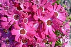 Blommor i regna Arkivbilder