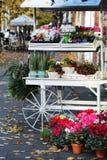 Blommor i roma Royaltyfri Fotografi