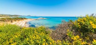 Blommor i Scoglio di Peppino shoreline Royaltyfri Fotografi