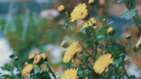 Blommor i snowen arkivfilmer