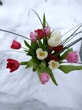 Blommor i snowen Royaltyfri Foto