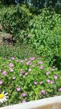 Blommor i sol Fotografering för Bildbyråer