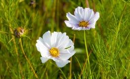 Blommor i solen arkivbild
