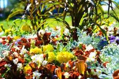 Blommor i solen Arkivbilder
