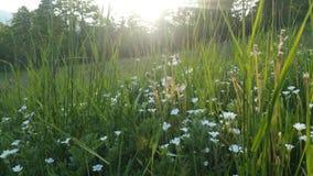 Blommor i solen fotografering för bildbyråer