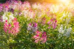 Blommor i solljuset Fotografering för Bildbyråer