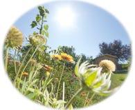 Blommor i solsken arkivfoton