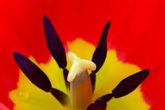 Blommor i solskenet arkivfoto
